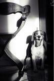 Bored hond Royalty-vrije Stock Foto