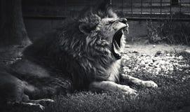 Bored king Royalty Free Stock Image