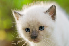 Bored kitten Royalty Free Stock Photos