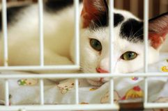 Bored Kitty In Cage. Bored kitty lock up in cage. be kind to all living creatures Royalty Free Stock Photography