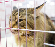 Bored kitty in cage. Stock Photography