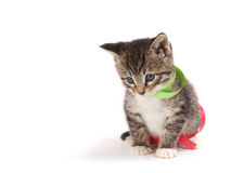 Bored kitty with ribbons. Stock Photos
