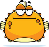 Bored Little Blowfish Stock Images