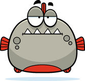 Bored Little Piranha Stock Photography