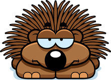 Bored Little Porcupine Royalty Free Stock Photography