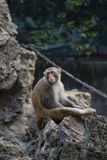 A bored monkey in a daze in the sun. Photographed in Mianyang stock photos