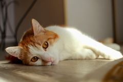 Bored young cat Stock Photos