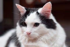 Borggård katten royaltyfria bilder