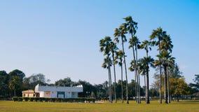 Borggård med palmträd royaltyfria foton