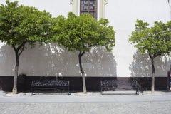 Borggård med träd och bänkar arkivfoto