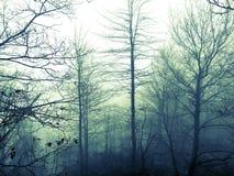 Borggårds dimma Arkivbild