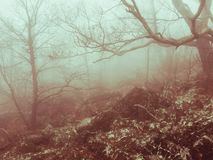 Borggårds dimma Arkivfoto