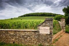borgoña Corton-Carlomagno es la denominación magnífica de Cru para los vinos blancos de la colina de Montagne de Corton, Francia foto de archivo libre de regalías