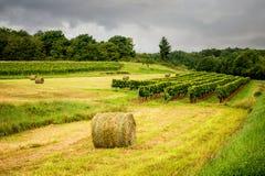 borgoña Muestras de carretera nacional francesas del vino que llevan a los viñedos superiores de Borgoña franco fotos de archivo