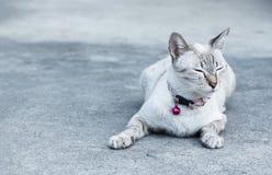Boring cat Stock Photos