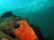 Boring Tube Sponge. In turquoise water Royalty Free Stock Image
