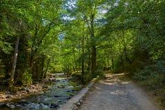BORJOMI, GRUZJA - 07 2017 SIERPIEŃ: Borjomi centrali grodzki park dla Obrazy Royalty Free
