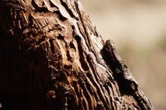 Borkenkäferbeschaffenheit von der Nahaufnahmeansicht lizenzfreie stockbilder
