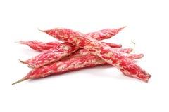 豆borlotti 免版税库存照片