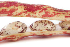 Borlotti bean close up Royalty Free Stock Images