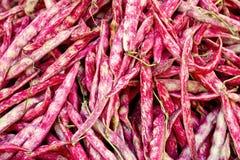 Borlotti Beans Stock Image