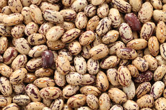 Borlotti beans Royalty Free Stock Images