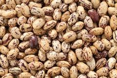 Borlotti beans Royalty Free Stock Images