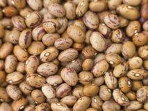 Borlotti Beans Royalty Free Stock Photos