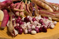 the borlotti beans have innumerable properties, they lend themselves to various recipes in the kitchen royalty free stock photos