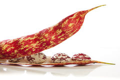 Borlotti beans in the pod Stock Photography