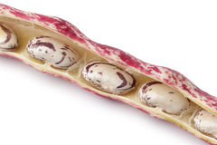 Borlotti beans in the shell Royalty Free Stock Image