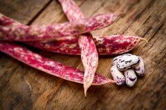 Borlotti beans - tilt shift selective focus effect Royalty Free Stock Photography