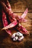 Borlotti beans - tilt shift selective focus effect Stock Images