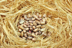 Borlotti dried beans Royalty Free Stock Image