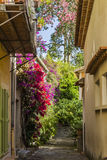 Bormes les mimosas. Is a flowery village Stock Photography