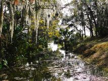 Born on the Florida Bayou. A creek leading to a lake in Altamonte Springs, Florida surrounded by moss covered trees Royalty Free Stock Photo