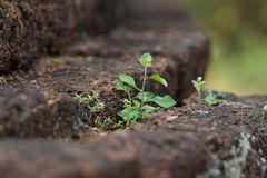 Born. Grass growing in the garden Royalty Free Stock Image