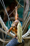 Bornean orangutan cub Royalty Free Stock Photography