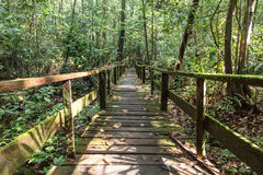 Borneo djungel Royaltyfri Foto