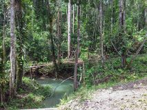 Borneo djungel nära Kuching Malaysia 2013 arkivbilder