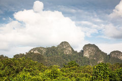 Borneo jungle Royalty Free Stock Photos