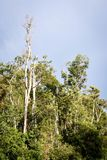 Borneo Jungle, rainforest in Tanjung Puting National Park Royalty Free Stock Images