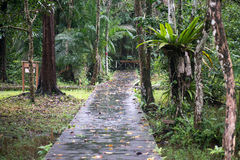 Borneo jungle. Walking trail in Borneo tropical rainforest, Bako national park, Sarawak, Malaysia stock photography