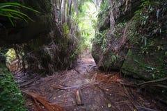 Borneo jungle. Walking trail in Borneo tropical rainforest, Bako national park, Sarawak, Malaysia stock photo