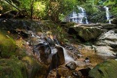 Borneo Jungle. Jungle with waterfalls in Sarawak, Borneo Malaysia stock image