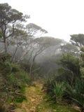 borneo kinabalu mount leśna chmury zdjęcia royalty free