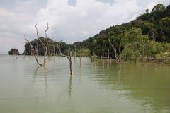 Borneo National Park Stock Photos