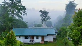 Borneo-Natur Stockbilder