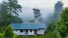Borneo Nature. Morning view in the middle of Borneo jungle Stock Images
