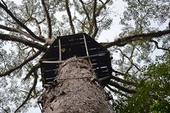 Borneo niżowy las tropikalny jest ecoregion wśród tropikalnego i podzwrotnikowego mokrawego broadleaf lasu biome wielka wyspa, obraz stock